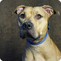 Adopt A Pet :: MARCUS - Cliffside Park, NJ