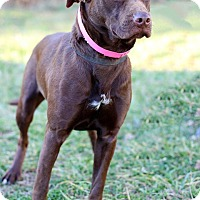 Adopt A Pet :: Isabelle - Waldorf, MD