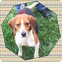 Adopt A Pet :: Becca - Baltimore, MD