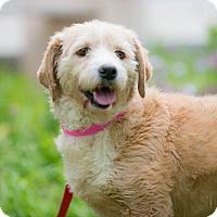 Adopt A Pet :: Mina - Irvine, CA