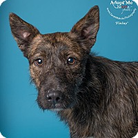 Adopt A Pet :: Finlay - New Milford, CT