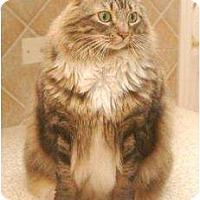 Adopt A Pet :: Tucker - Franklin, NC