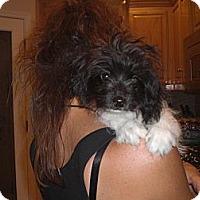 Adopt A Pet :: Milo - Rescue, CA