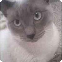 Adopt A Pet :: Nacho - Washington Terrace, UT