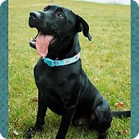 Adopt A Pet :: Jengo - Seattle, WA