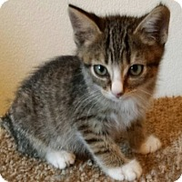 Adopt A Pet :: Tangu - North Highlands, CA