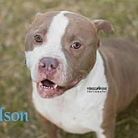 Adopt A Pet :: Wilson - Crandall, GA