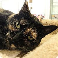 Adopt A Pet :: Priscilla - Port Angeles, WA