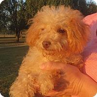 Adopt A Pet :: Myra - Westport, CT