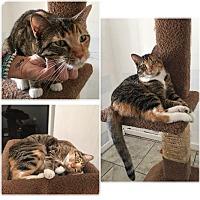 Adopt A Pet :: Missy Jane - Phoenix, AZ