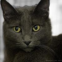 Adopt A Pet :: DACINIAH - Houston, TX