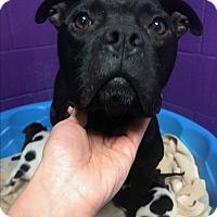 Adopt A Pet :: Tyra - Newport, NC