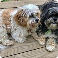 Adopt A Pet :: Cocoa & Brownie - Potomac, MD