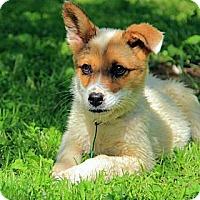 Adopt A Pet :: Humphery - Staunton, VA