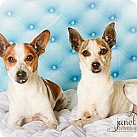 Adopt A Pet :: Jack & Jill - Chattanooga, TN