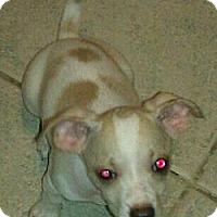 Adopt A Pet :: bridgett - Phoenix, AZ