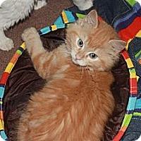 Adopt A Pet :: Buck (LE) - Little Falls, NJ