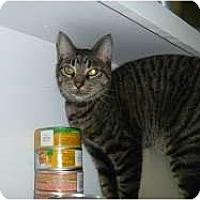 Adopt A Pet :: Squeekers - Hamburg, NY
