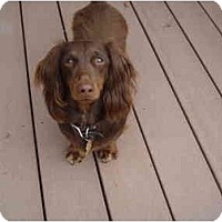 Adopt A Pet :: Duke 2207 - San Jose, CA
