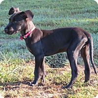 Adopt A Pet :: *Buddy - PENDING - Westport, CT