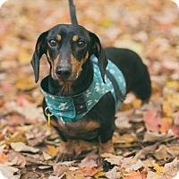 Adopt A Pet :: Terrance Hill - Toronto, ON