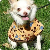 Adopt A Pet :: Louis - Osseo, MN