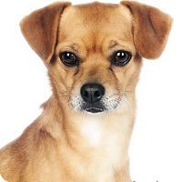 Adopt A Pet :: Max - Lodi, CA