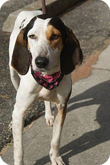 Hound (Unknown Type) Mix Dog for adoption in Kinston, North Carolina - Hunter