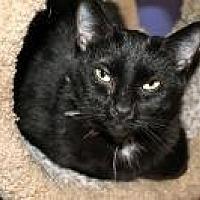 Adopt A Pet :: Jett - Memphis, TN