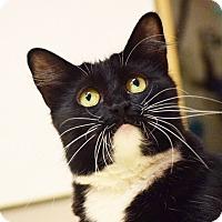 Adopt A Pet :: Audra - Dallas, TX