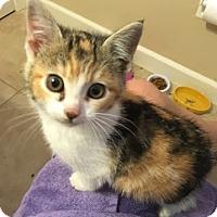 Adopt A Pet :: Callisto - North Highlands, CA