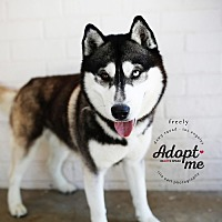Adopt A Pet :: Freely - West Los Angeles, CA