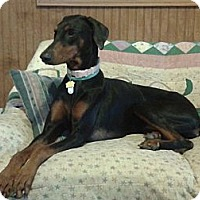 Adopt A Pet :: Kay--pending - New Richmond, OH