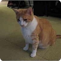 Adopt A Pet :: Miles & Missy - West Los Angeles, CA