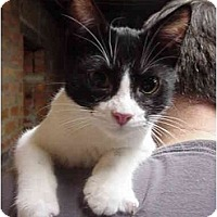 Adopt A Pet :: Jessy - Chesapeake, VA