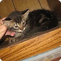 Adopt A Pet :: Motif - Dallas, TX