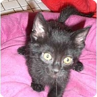 Adopt A Pet :: Foreman - Lombard, IL