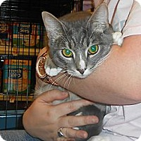 Adopt A Pet :: Snap - College Station, TX