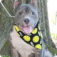 Adopt A Pet :: Smiley - Snellville, GA