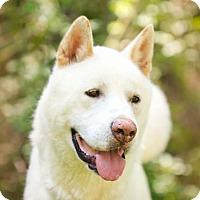 Adopt A Pet :: Toshi - Toms River, NJ