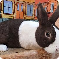 Adopt A Pet :: Tulip - Foster, RI