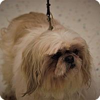 Adopt A Pet :: Tanner - Lansing, MI