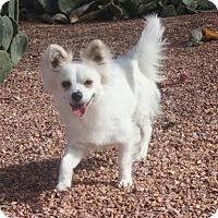 Adopt A Pet :: Miesha - Henderson, NV