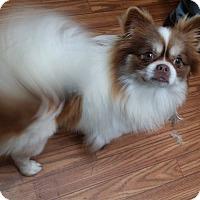 Adopt A Pet :: gizmo - Crump, TN