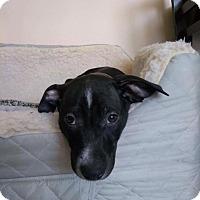 Adopt A Pet :: Riff-Raff - New Milford, CT