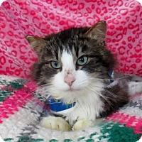 Adopt A Pet :: Echo - Lloydminster, AB
