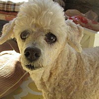 Adopt A Pet :: Kay sweet senior - phoenix, AZ