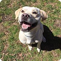 Adopt A Pet :: Jack - North Brunswick, NJ