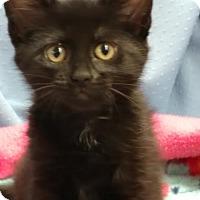 Adopt A Pet :: Persia - Greenville, IL
