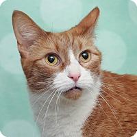 Adopt A Pet :: Astro - Chippewa Falls, WI